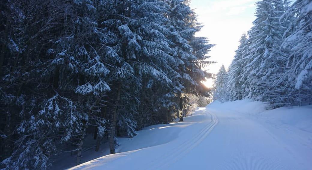 Ski de fond - Secteur - La Tour d'Auvergne - La Stèle