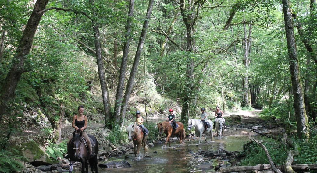 Centre Équestre -  Élevage de chevaux - Manade des Combrailles