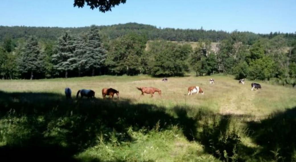 Des chevaux à la campagne