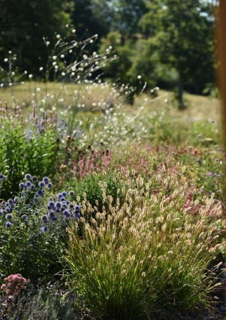 Jardin Fleur Amour