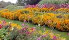 L'Herbier de Saint-Fiacre