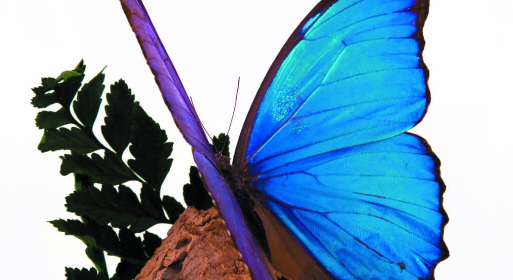 Musée - Exposition de papillons et autres insectes du monde