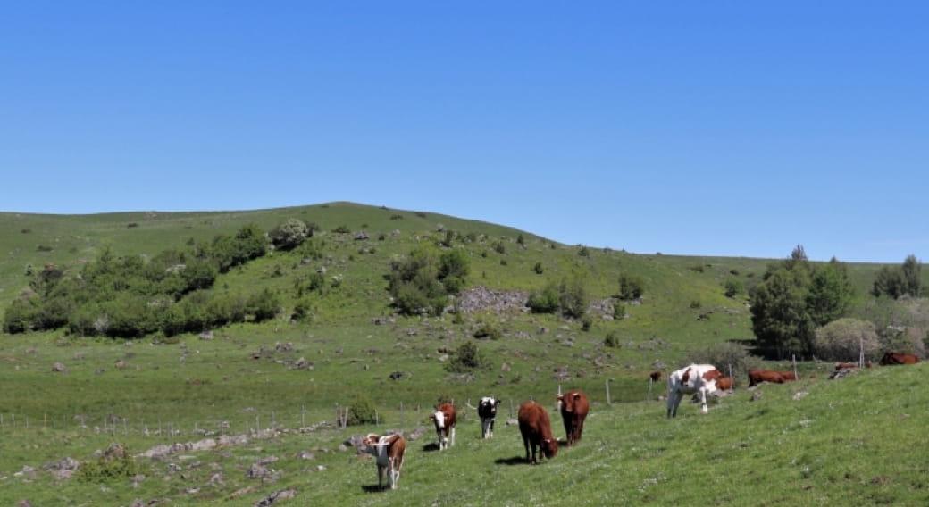 Estives du plateau de Chastel-sur-Murat Espace Naturel Sensible du Cantal