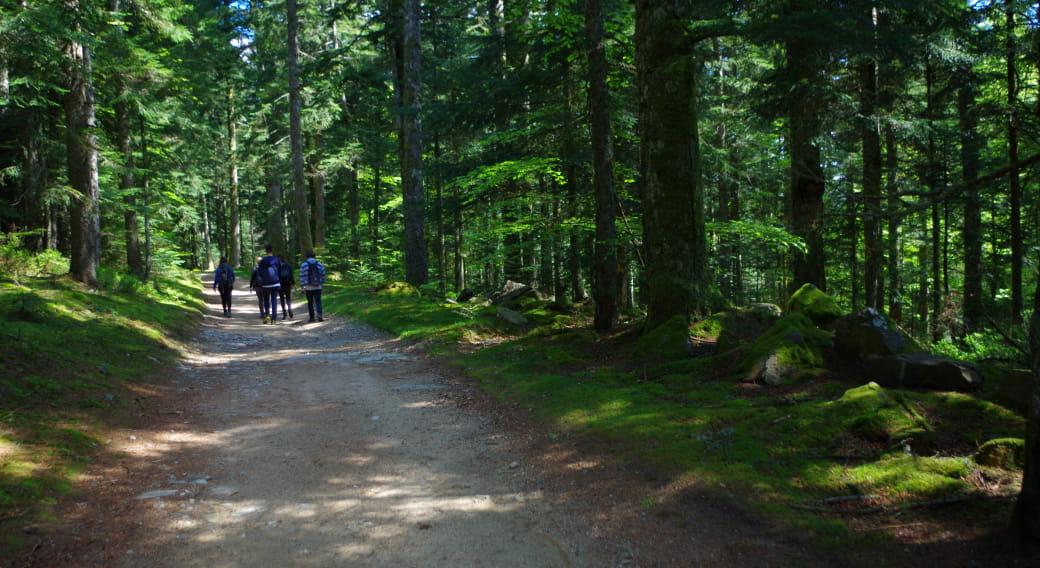 Forêt des Bois Noirs, Puy du Montoncel