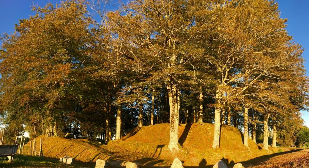 Le Puy de l'arbre