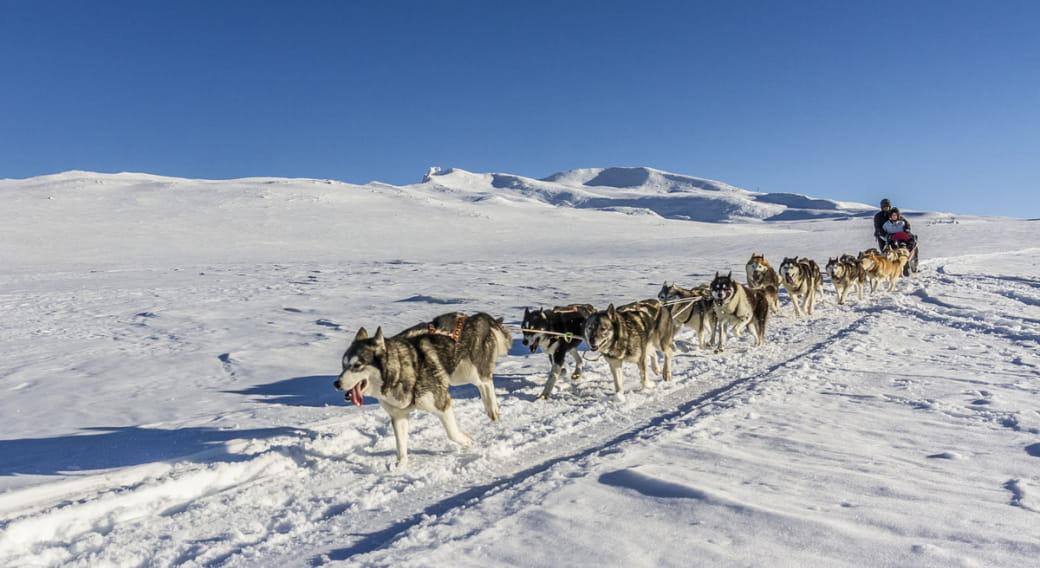 Randogs Chastreix : chiens de traineaux