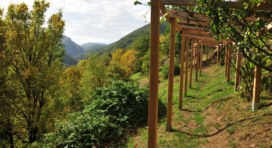 Pailhats de Courgoul : terrasses cultivées
