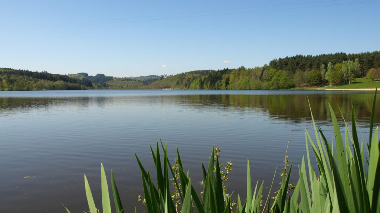 Lac et sous-bois