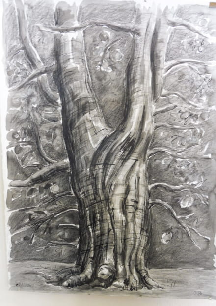 Exposition sur les arbres 'Arbres au fusain'