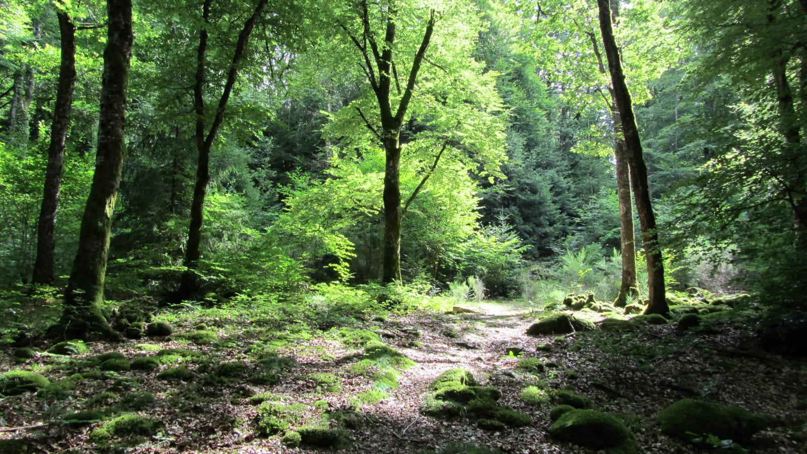 PR 20 - Le bois de Janiac