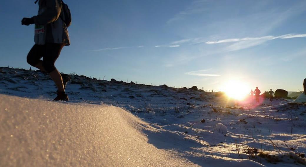 Ecir hivernal