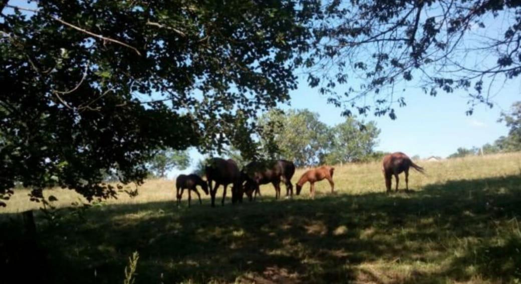 Des chevaux libre d'évoluer en pleine nature