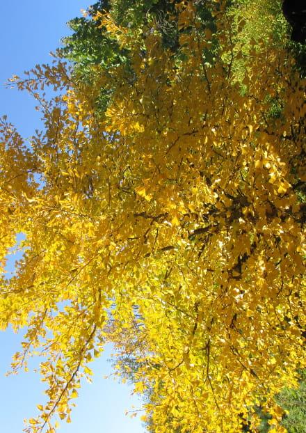 Annulé - Rendez-vous du patrimoine 'Voyage au pays des arbres'