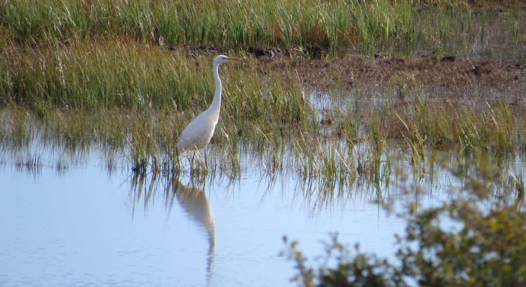 Les Oiseaux du Lac des Bordes