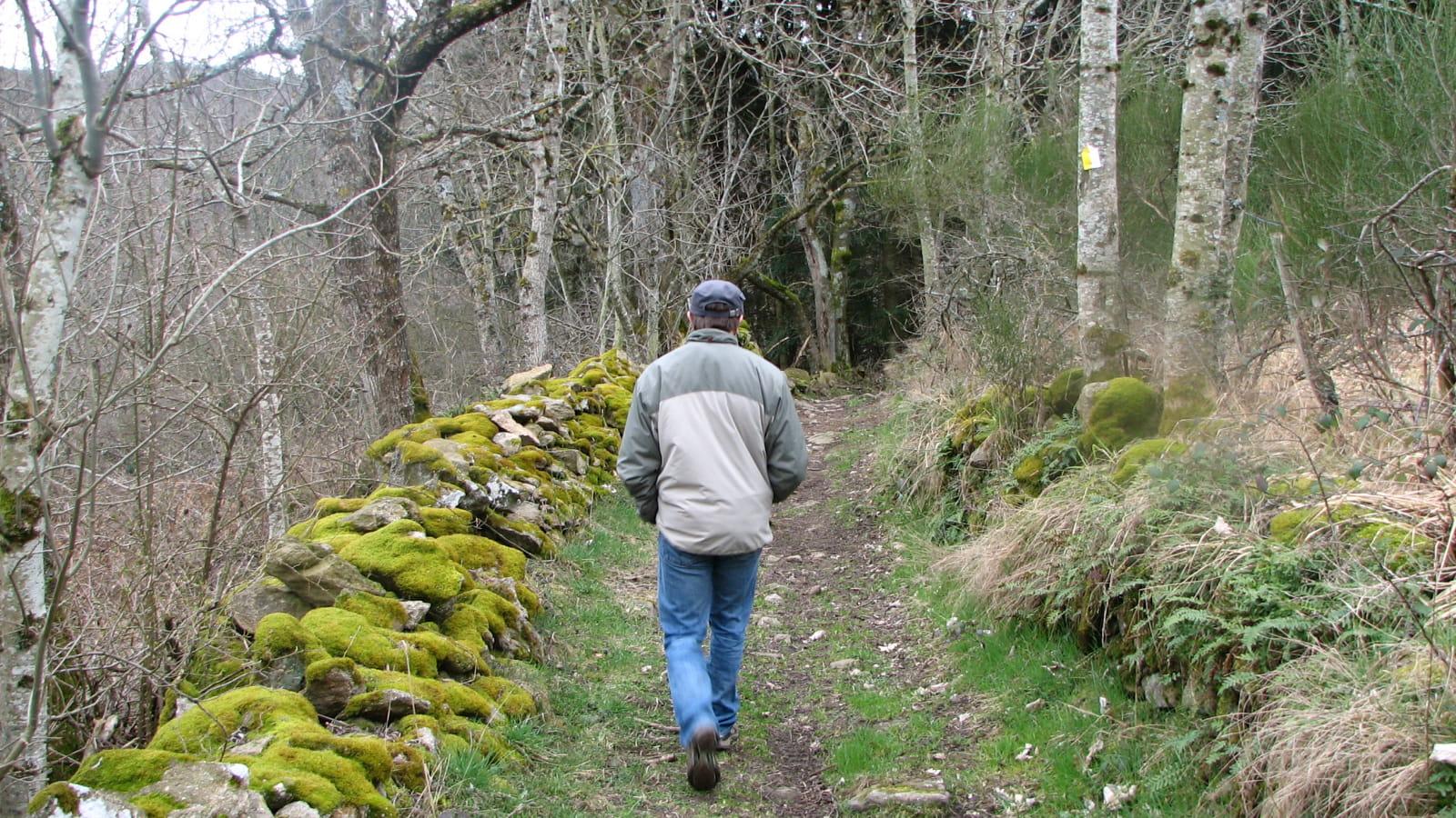 Sentier botanique forestier ' le Vallon secret de Subertha'