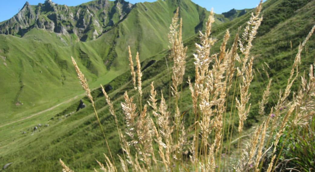 Réserve Naturelle de Chastreix-Sancy
