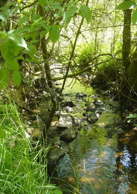 Site de pêche - Rivière Le Chavanon