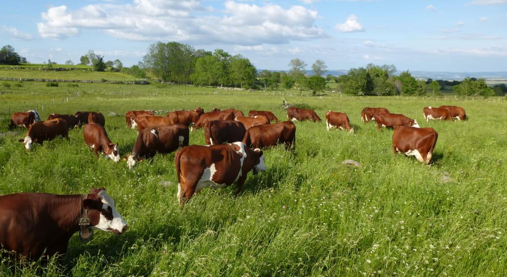 Visite de la ferme du Jarry