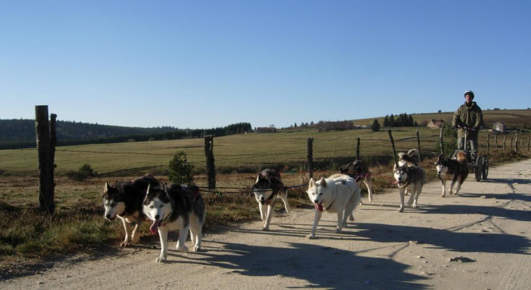 Sancy traîneaux : chiens de traîneau