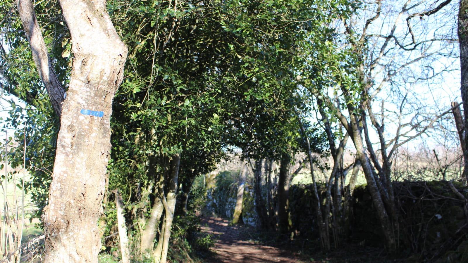 Randonnée Allée des Chênes