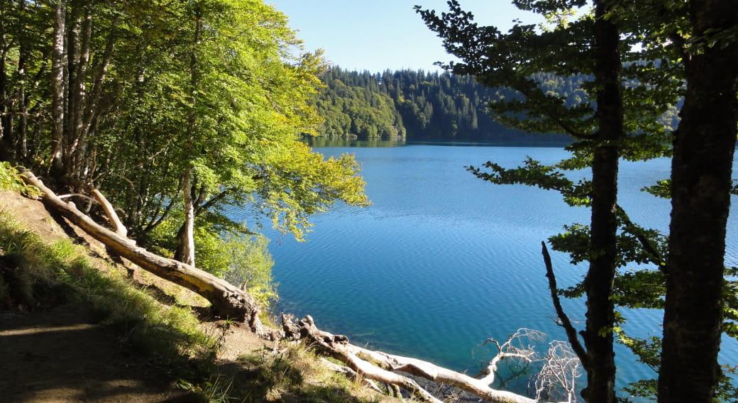 Promenade du jeudi 'Lac, forêts et perspective inédite sur le Sancy'