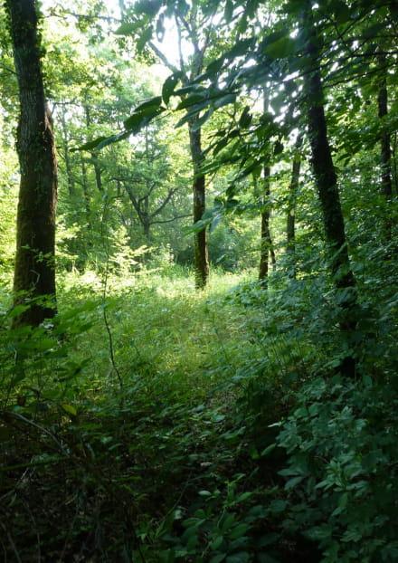 Réserve Naturelle des Cheires et Grottes de Volvic