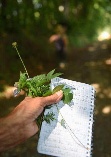 Un herbier sur la Côte Verse