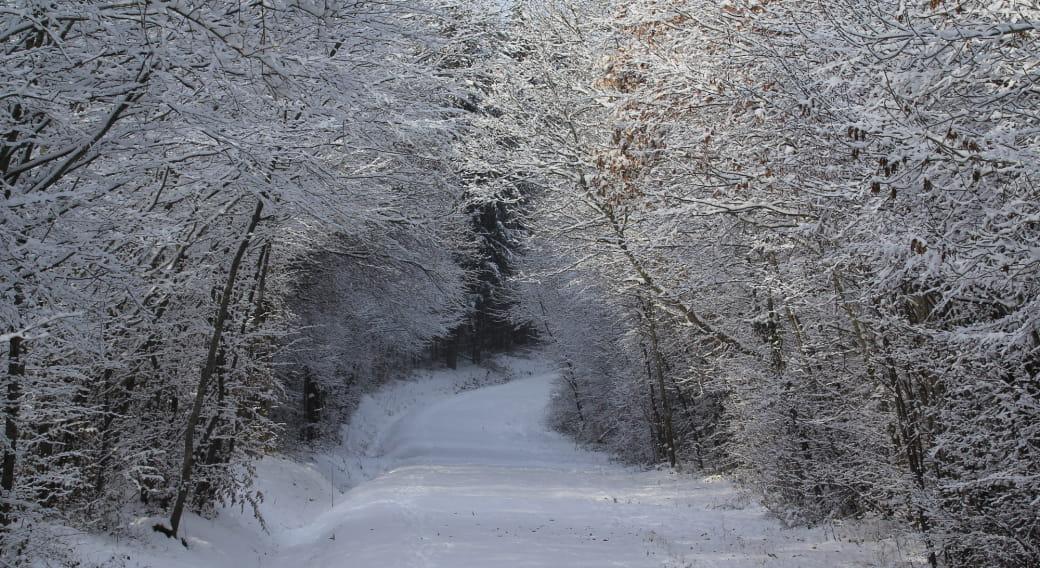 La forêt en hiver : reconnaissance et dormance