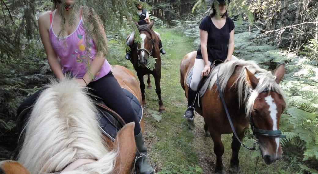 Ferme équestre de Polytrait - le cheval autrement - activités équestres