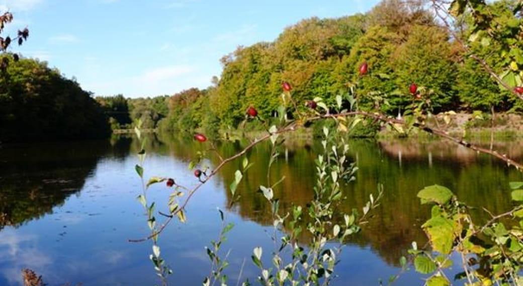 Site de pêche - Étang du Cheix