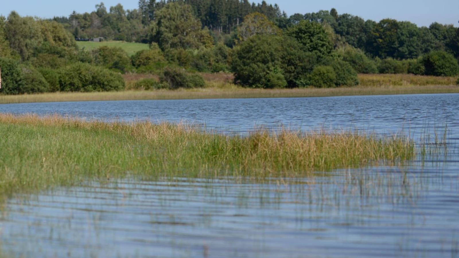 L'étang de Farges