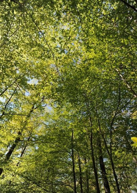 Les vertus de la forêt