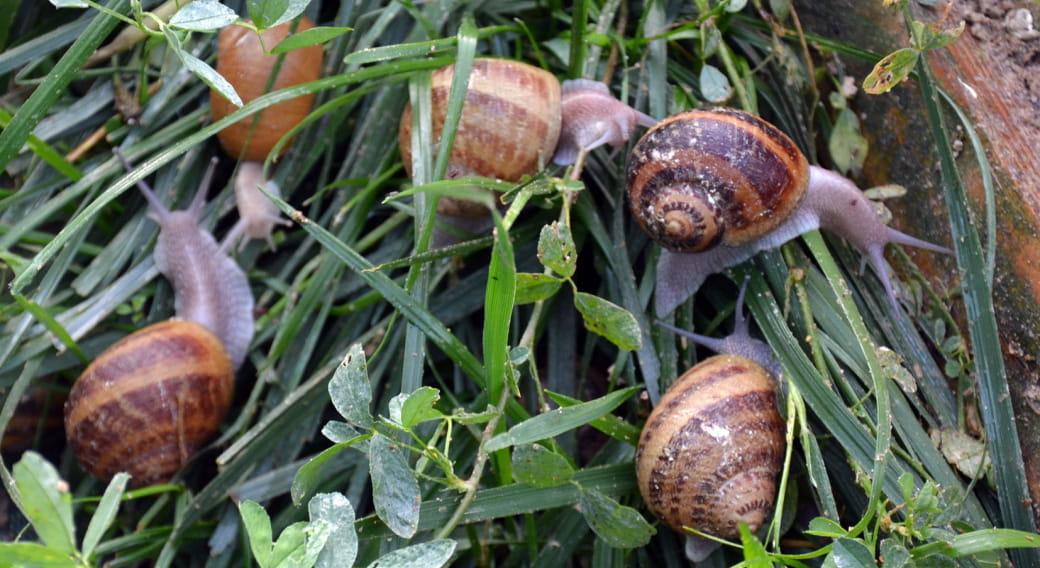 Escargots de culture en promenade