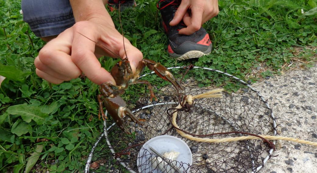 Atelier pêche aux écrevisses sur l'Allanche