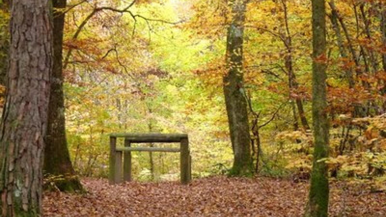 Parcours santé de la forêt du Pirou