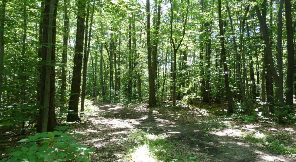 Arboretum de Pierrefort, sentier découverte