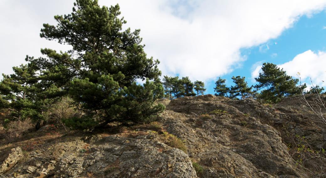 Puy de Marmant