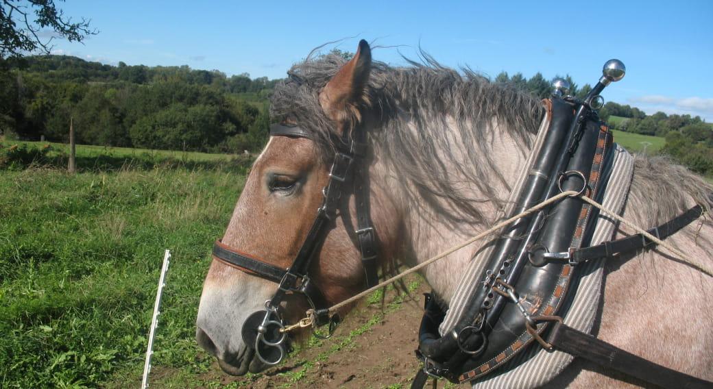 Jardin et chevaux/initiation à la traction animale