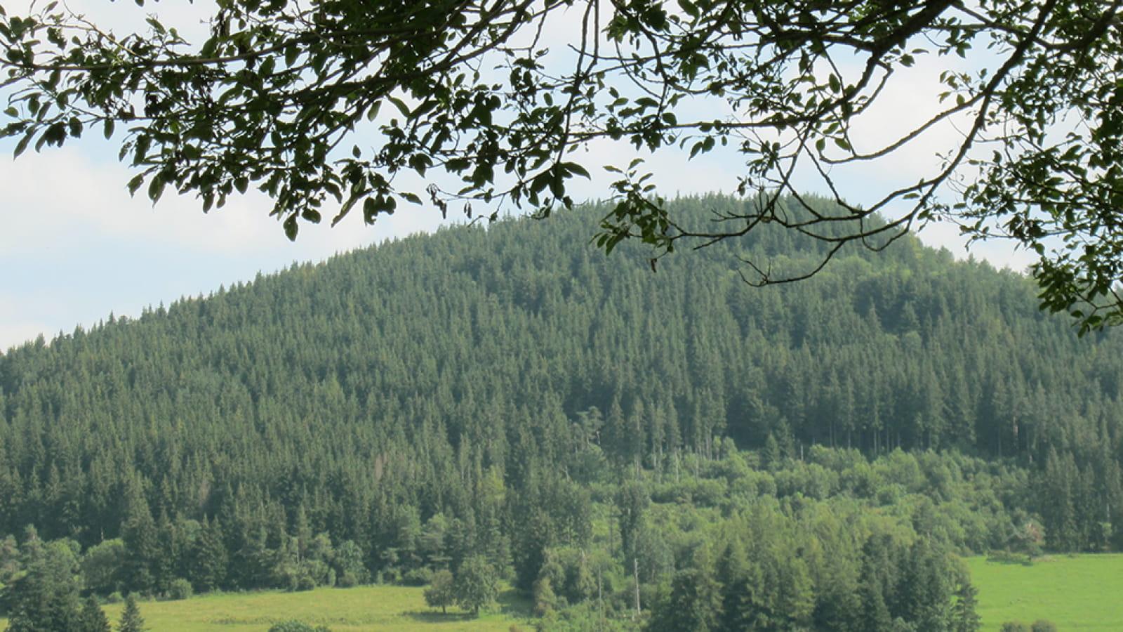 Puy de Combegrasse et narse d'Espinasse