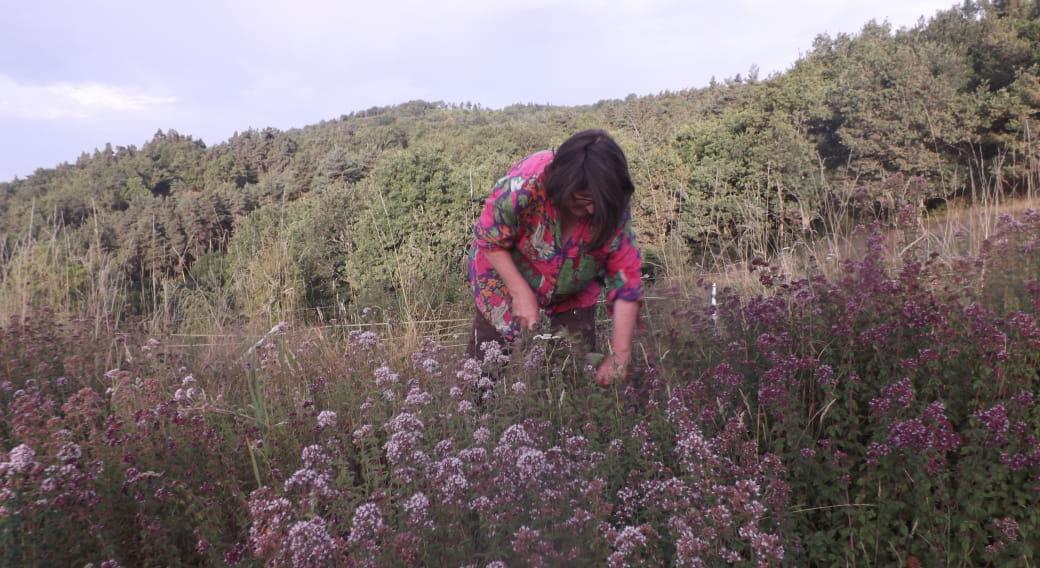 Le jardin des charmilles