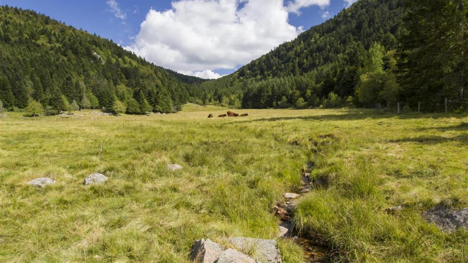 La Vallée du Fossat - Les balades de Léa et Tino