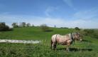 Jardins et Chevaux  - Découverte du cheval de trait au travail