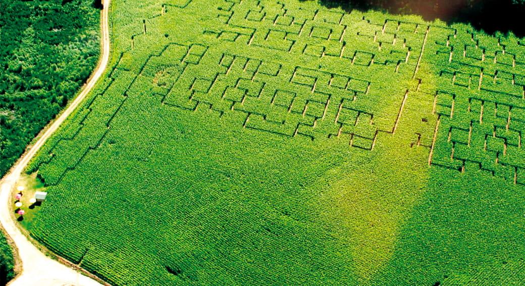 Labyrinthe de la châtaigneraie